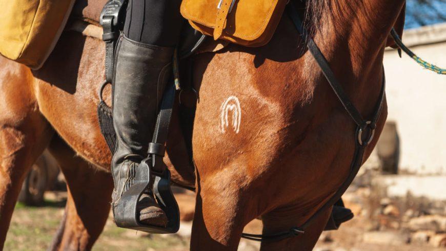 principais raças de cavalo do Brasil