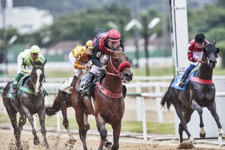 Esportes com cavalos -Turfe - Corrida de Cavalos