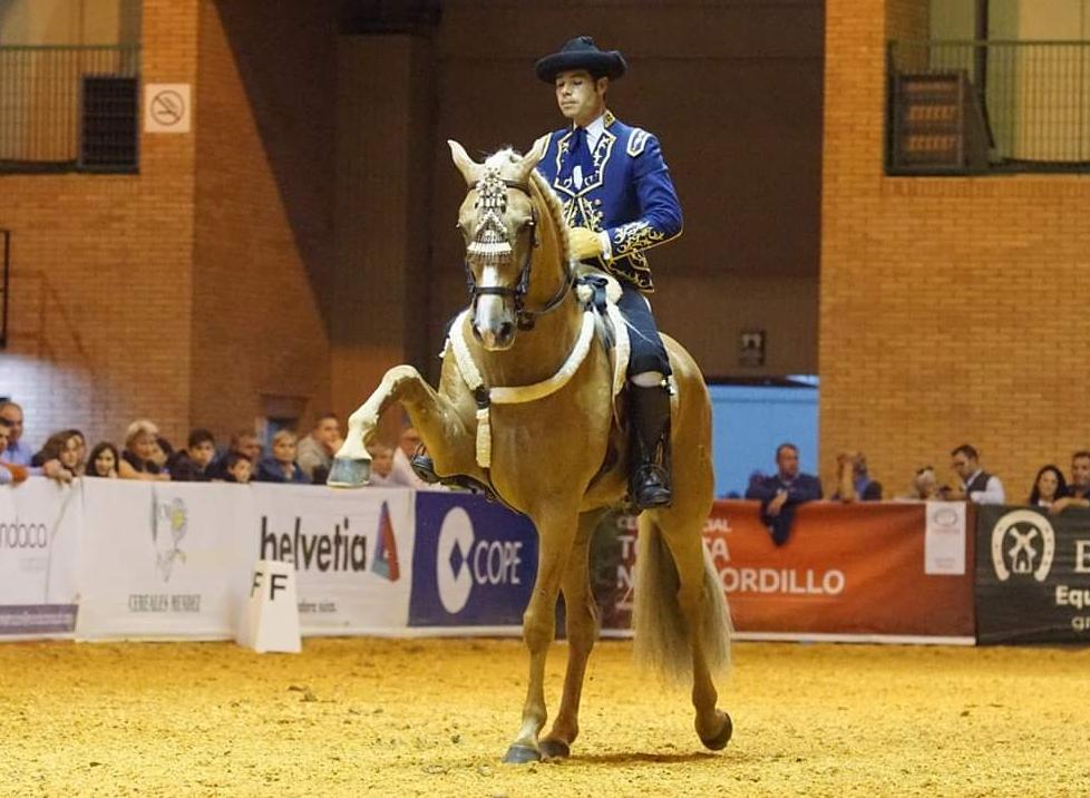 Esportes com Cavalo: Doma Clásica