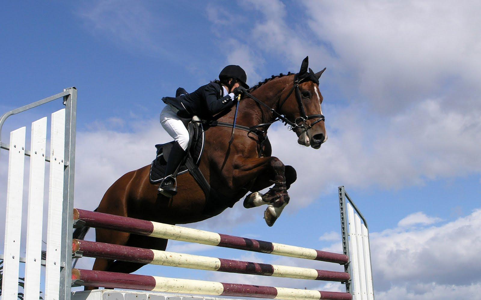 Esportes com cavalos: Salto de Obstáculos